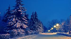 winter snowflake photography snow relax park beautiful winter