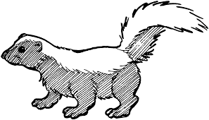 skunk coloring pages skunk coloring pages bestofcoloring images 5651