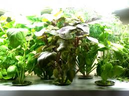 indoor gardening lights pyihome com