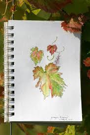 grape leaves rosemary u0027s blog