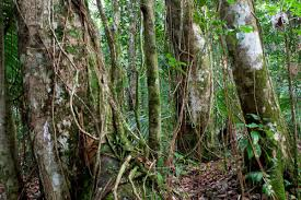 5 Dominant Plants In The Tropical Rainforest Fs Tropical Research On Twitter