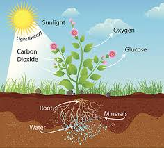Green Plants Fascinating Facts About Photosynthesis Of Non Green Plants Blog
