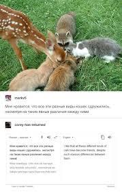 Cat Memes Tumblr - russian cat translations know your meme