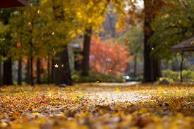 fall color findlay visit findlay