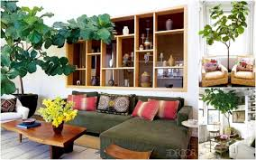 home interior plants fanciful roomindoor plants decoration room bedroom living room