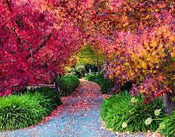 Mt Lofty Botanic Gardens The Adelaide Are Freaking Awesome Adelady