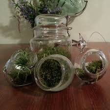 interesting blown glass terrarium containers 91 on layout design