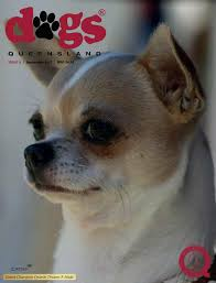 bichon frise qld dogs queensland the queensland dog world issue 9 september
