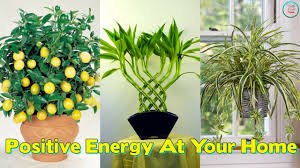 plants at home these 10 plants improve the positive energy at your home youtube