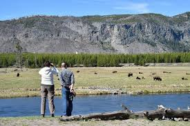 yellowstone national park worker falls to wtvr