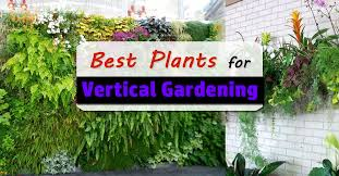 How To Plant Vertical Garden - best plants for vertical garden vertical garden plants balcony