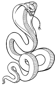 cobra snake coloring pictures murderthestout
