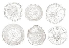 tree ring vectors free vector stock graphics images