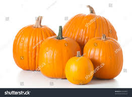 free halloween orange background pumpkin many orange halloween pumpkins different shapes stock photo