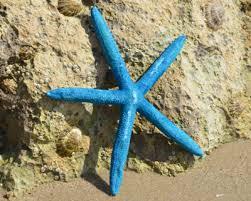 Starfish Decorations Starfish Dried Starfish Starfish Sugar Starfish Knobbly