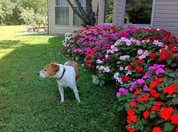 Flower Garden Ideas Pictures Amazing Of Awesome Simple Flower Garden Ideas For Simple 5252