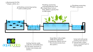 aquaponics fish tank diy juni 2016