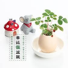 mini plants simulation of egg shell mini potted end 7 11 2019 4 15 pm