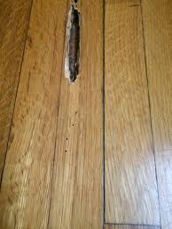 Laminate Flooring Door Trim Termite Turf U2014 Dial One Franklynn Pest Control
