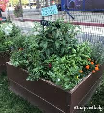 garden travels urban vegetable garden with a touch of whimsy