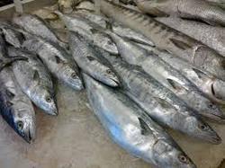 fish farming wholesale supplier sahibabad