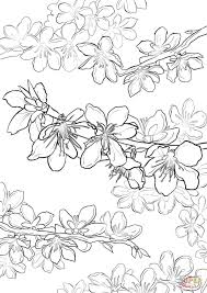 peach blossom coloring page free printable coloring pages