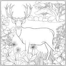 elk coloring page free moose coloring page reindeer rudolf