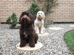 the cockapoo and max new garden feature