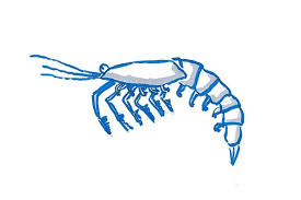 real plankton cliparts free download clip art free clip art