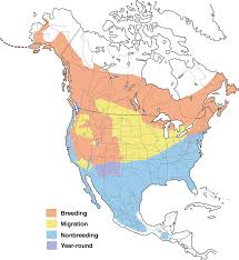 Bluebird Map Hermit Thrush Range Map All About Birds Cornell Lab Of Ornithology