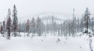 rod mclean photography forest with snow in winter