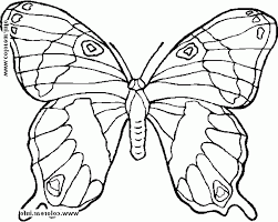 free animal printable coloring pages buterfly 494096 coloring