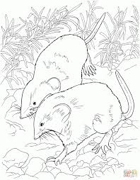 rat in the forest download coloring page animal images of rats