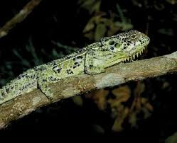 Madagascar Blind Snake Pink Blind Snake Discovered In Madagascar Story From 2007 A Pink