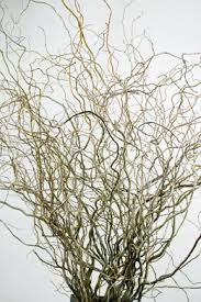 Branches In A Vase Curly Willow Branches And Birch Branches 20 60 Off Saveoncrafts