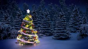 how to start a christmas tree farm how to start an llc