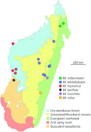 biomes map a map of madagascar with the major biome types recognized in modern