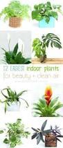 Office Plants Office Design Office Plants No Sunlight Office Desk Plants No
