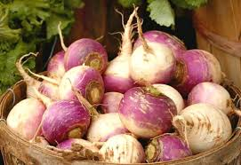 planting guide starting turnips from seed dig for your dinner