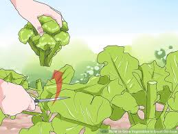 how to grow vegetables in small gardens with pictures wikihow