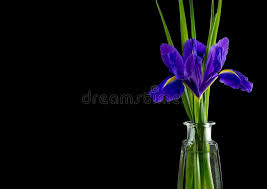 flowers blue purple irises with leaves glass vase top view stock