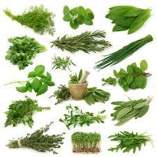 les herbes de cuisine herbes aromatiques de saison le gourmand du dimanche
