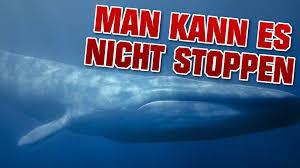 Whale Meme - blue whale challenge know your meme