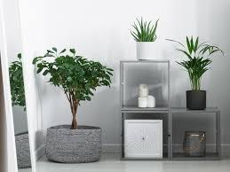 Bad Dekoration Pflanzen Frs Bad Ohne Fenster Full Size Of Und Modernen