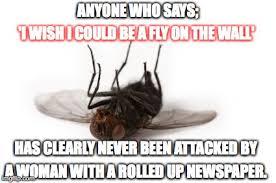 Fly Meme - dead fly memes imgflip