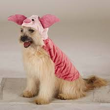 47 halloween costumes for your dog thefashionspot