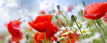 download wallpaper 2560x1024 poppies daisies field sky blur