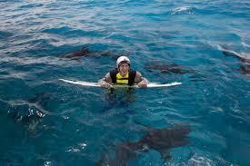 Maryland snorkeling images As 39 shark week 39 begins spottings near maryland new jersey JPG