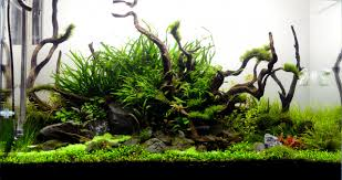 Aquascape Aquarium Plants Planted Tank Aqueous Reflection By Hiep Hong Aquarium Design