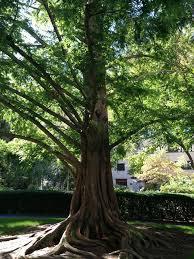 Define Tree The Garden U2014 Save The Prouty Garden
